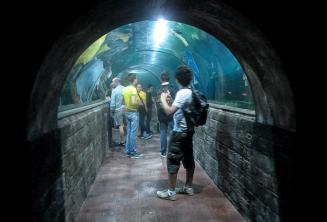 Sprachschüler in einem Aquarium Tunnel